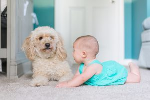 Six Benefits of Getting Your Carpets Professionally Cleaned